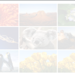 jQuery - Fading effects on the images